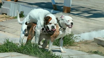 Related Pictures dogs mating with humans hard for real filmvz portal ...