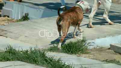 Woman And Dog Mating Woman And Dog Mating_Woman Mating With Animal