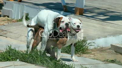 ... image search dogs mating with humans for dogs mating with humans dogs