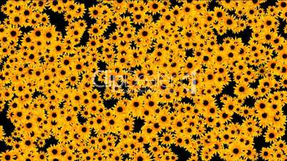 Sunflower Pattern Tumblr Clips Secuencia