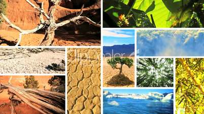 Montage Images of Green Vegetation & Barren Environments