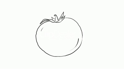 Video Footage Clip - Drawing of a tomatoTomato Line Drawing